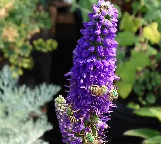 Cedar Grove Nursery, Greenhouse U0026 Farm U2022 Locally Grown In Santa Fe U0026  Stanley, NM